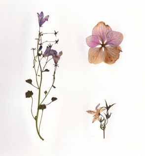 dried-flowers-2.jpg